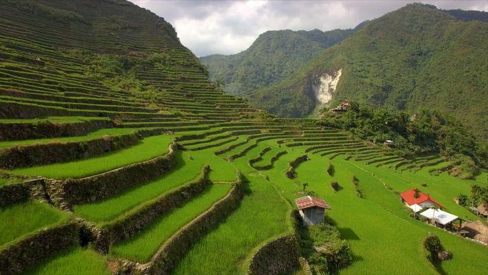 Recorre los exuberantes arrozales en terrazas de las Filipinas