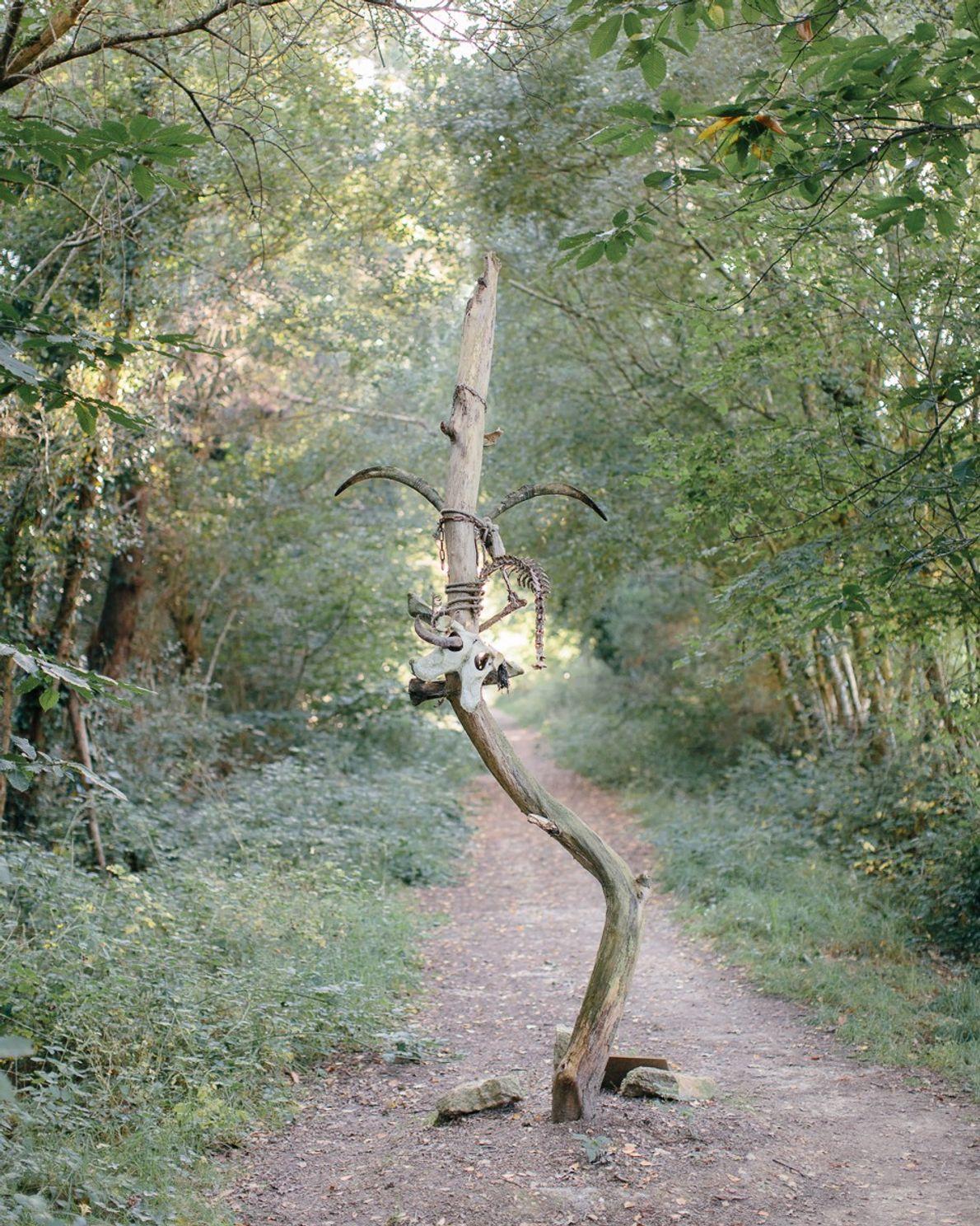 Un árbol decorado con un cráneo
