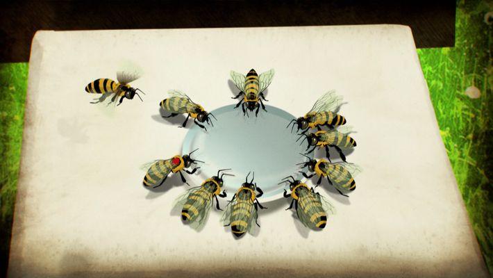 """¿Sabías que las abejas """"pueden hablar""""?"""