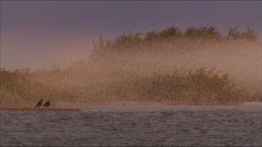 The mayflies invades lake Khanka