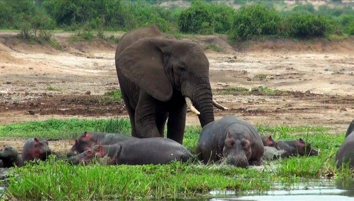 Un elefante malhumorado
