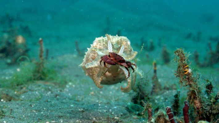 La sepia y el pulpo: dos cefalópodos fascinantes