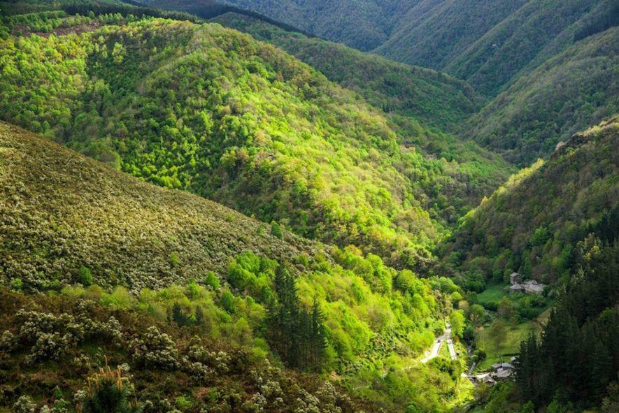 La densa vegetación da vida al paisaje de montaña de As Veigas, en Taramundi.