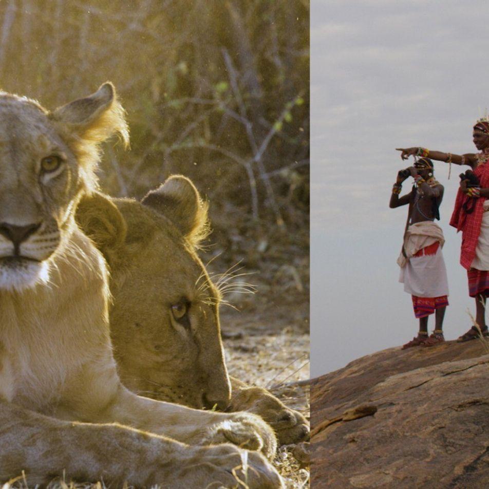 Estos guerreros han pasado de cazar leones a protegerlos