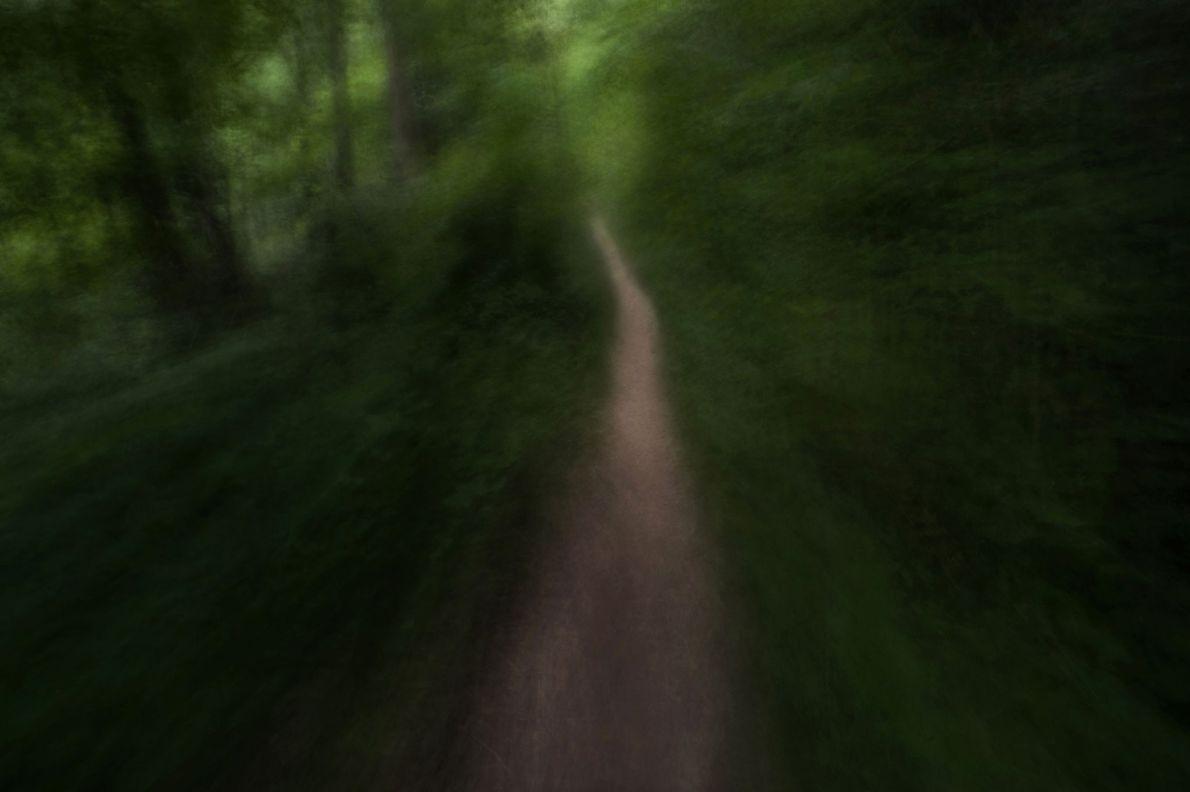 Un camino serpenteante