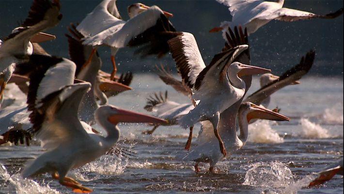 Feliz Día Mundial de las Aves Migratorias