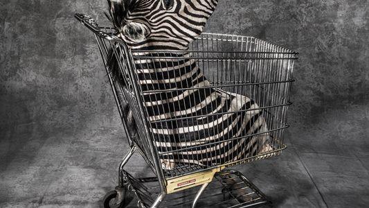 La fotógrafa Britta Jaschinski retrata el mundo del tráfico de animales salvajes