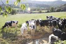 Bienestar animal en las granjas 13