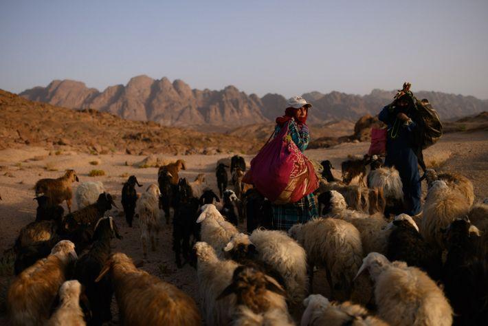 Zeinab Ibrahim regresa a la aldea de Al Tarfa