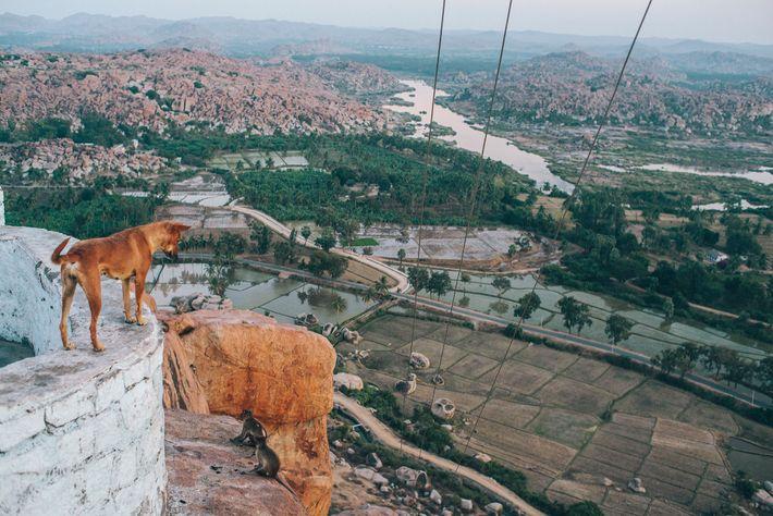 Perro en Hampi