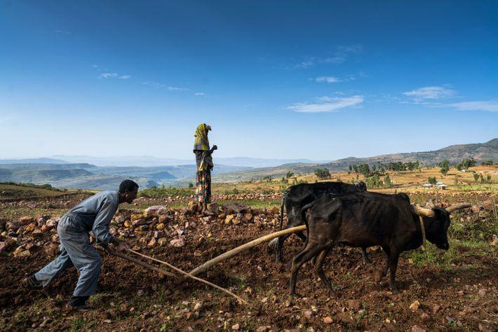 El agricultor Kiros Tadros ara su tierra