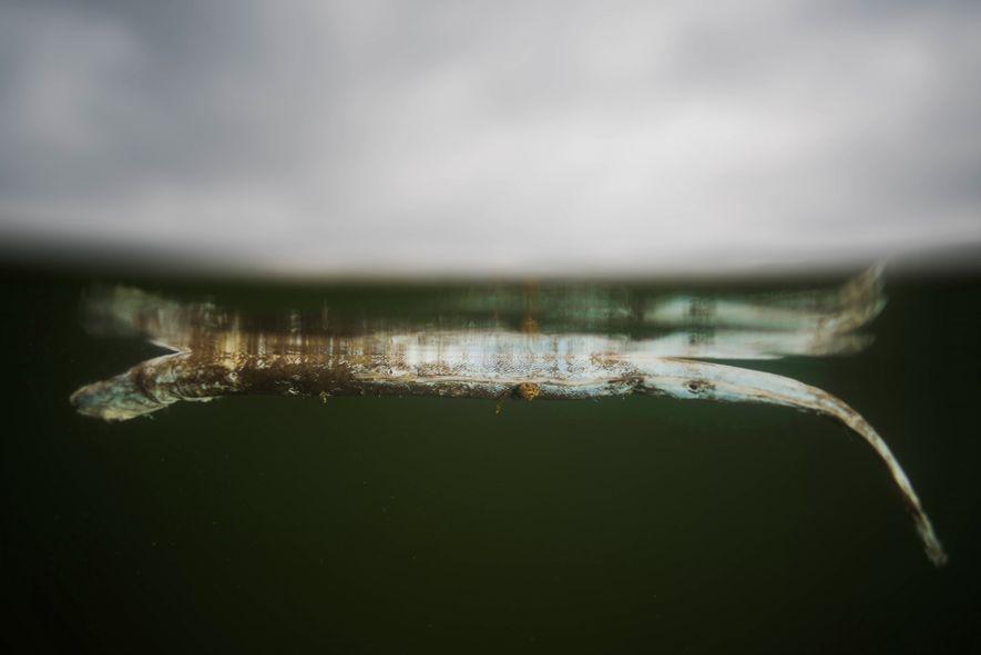 Mar Menor Colapso