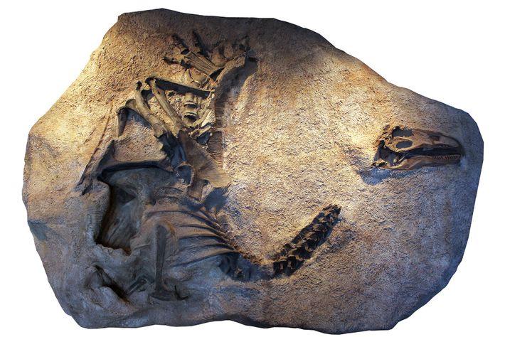 Allosaurus 03