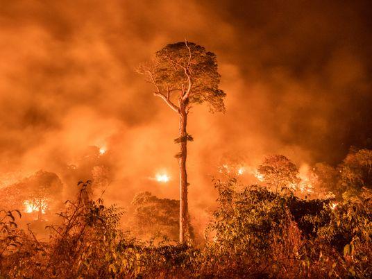 Las ocho claves principales del Pacto Leticia firmado por el Amazonas