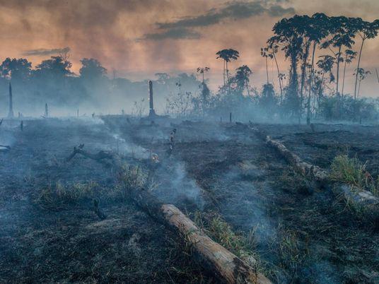 La Amazonia arde y se culpa a los ganaderos, pero no es tan sencillo