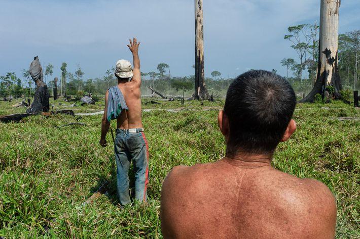 Ganaderos de la Amazonia