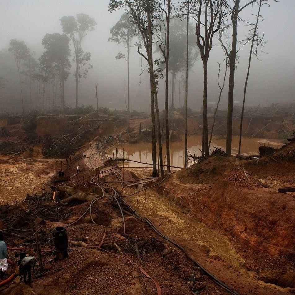 La minería de oro en la Amazonia provoca un aumento de los casos de malaria entre ...