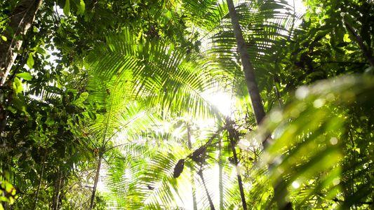 Algunos bosques tropicales muestran una resiliencia sorprendente ante el aumento de las temperaturas