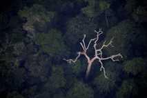 La Amazonia