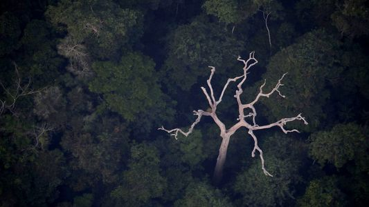 No, la Amazonia no produce el 20 % del oxígeno del planeta