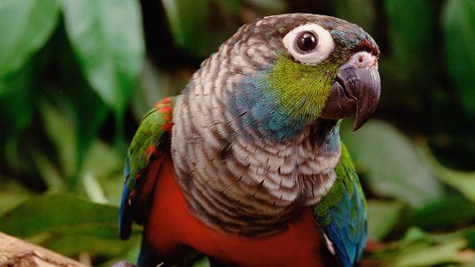 ¿Cómo afectan los incendios de la Amazonia a los animales salvajes?
