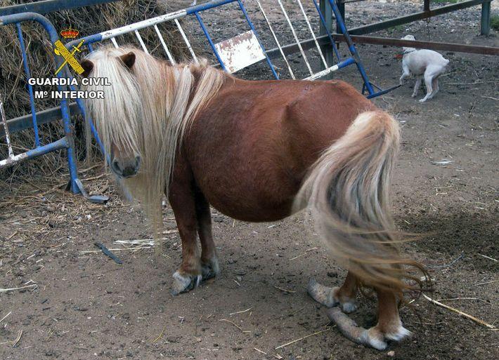 Animales zoo clandestino Murcia