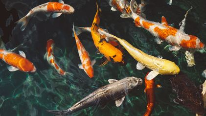 Las especies de agua dulce disminuyen un 83% desde 1970, la mayor extinción de vertebrados a ...
