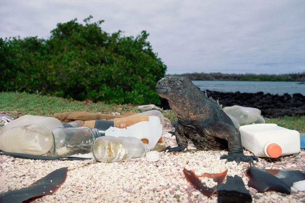 Los envases vacíos de plástico y cristal aparecen en la orilla y ensucian el hábitat de …
