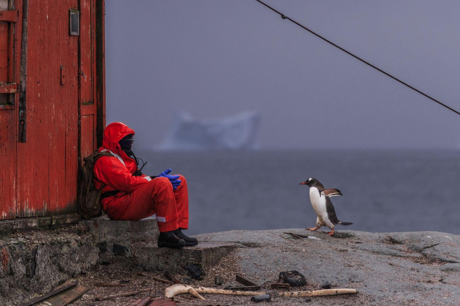 La Antártida es el último continente sin COVID-19: ¿qué harán los científicos para que eso no ...