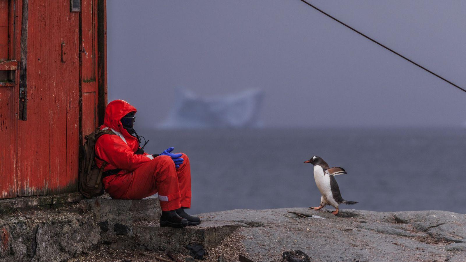 Fotografía de una persona y un pingüino papúa