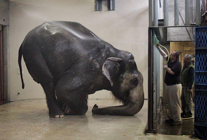 Elefante Packy