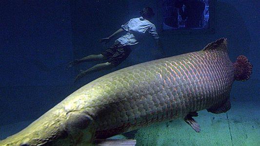 Fotogalería: Peces gigantes