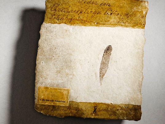 ¿Por qué la primera pluma fósil de dinosaurio provocó décadas de debates?