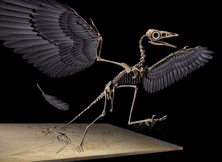 Reconstrucción en 3D del Archaeopteryx