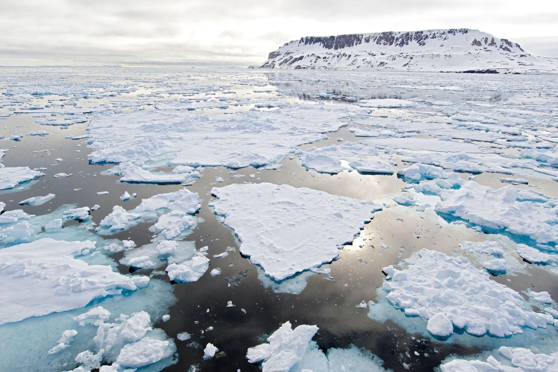 Hielo marino ártico