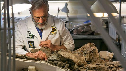 Descubierto un dinosaurio con armadura que vivió hace 75 millones de años