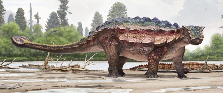 Reconstrucción del nuevo dinosaurio con armadura Akainacephalus johnsoni.