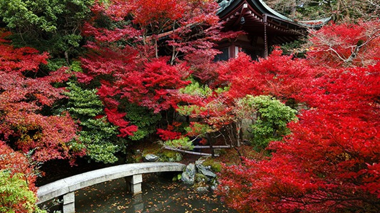 Hojas de otoño, Kyoto, Japón
