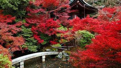 Los 10 mejores lugares para ver las hojas de otoño