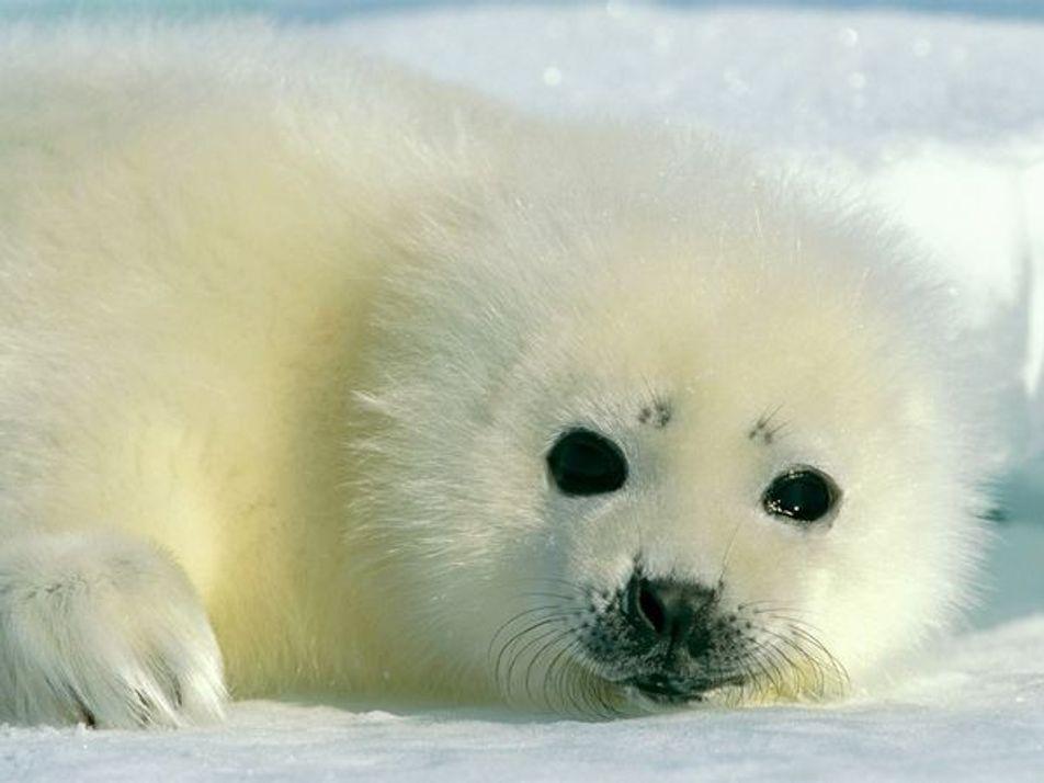 Adorables fotografías de crías de animales