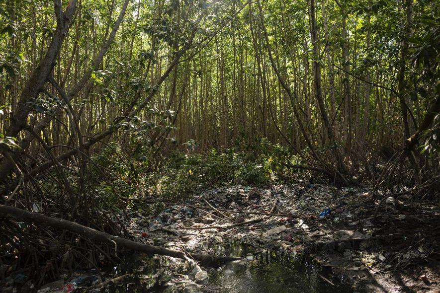 Los manglares prístinos están contaminados con desechos plásticos cerca de Tahura Ngurah Rai.