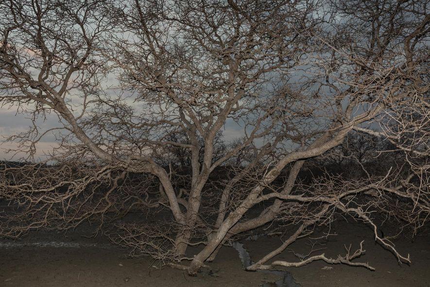 I. Gede Hendrawan, científico marino de la Universidad de Udayana, afirma que los manglares se han ...