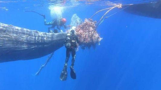 Rescatan a una ballena atrapada en redes de pesca ilegales en el Mediterráneo