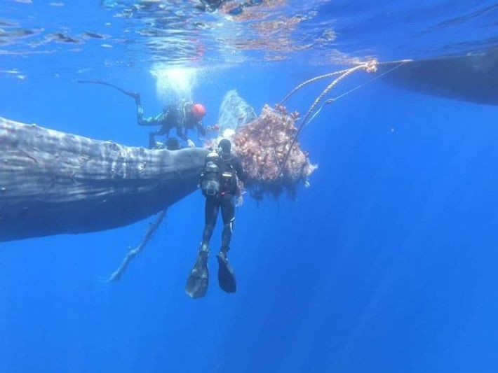 Las redes que provocaron el incidente son artes de pesca ilegales utilizadas para la captura del ...