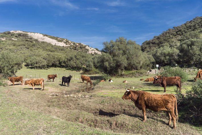 El 70 por ciento del abastecimiento de agua de España se utiliza en gran cantidad para la ...