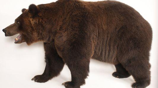Photo Ark: osos