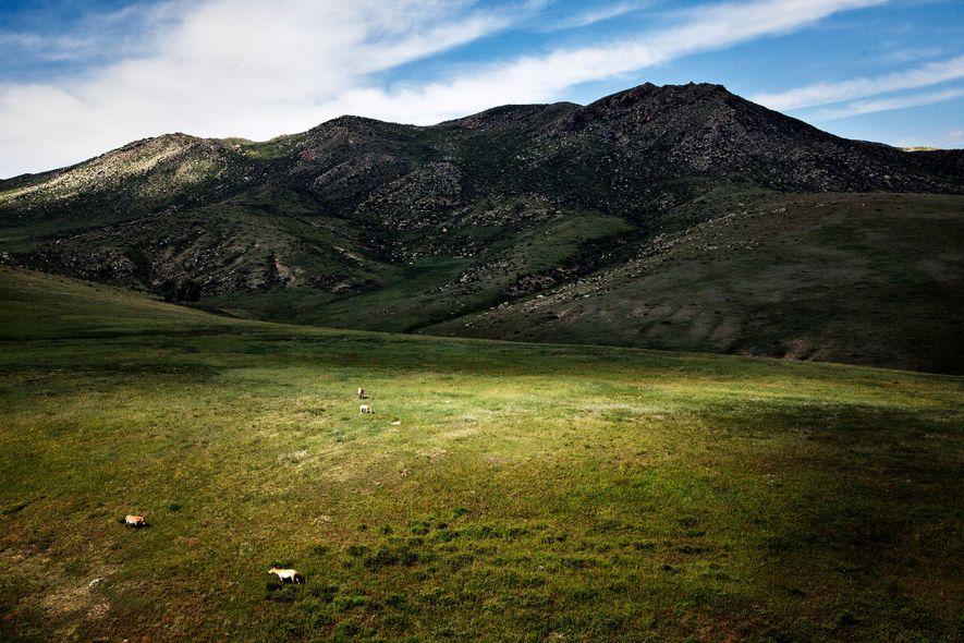 Los caballos salvajes pastan en una meseta mongola.