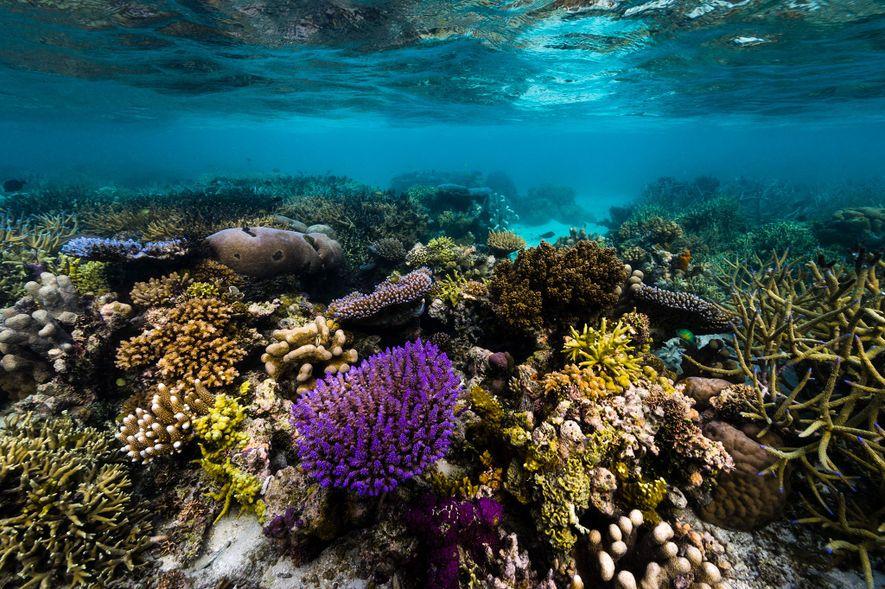 Papúa Nueva Guinea es famosa por su biodiversidad, tanto en tierra como en el mar.