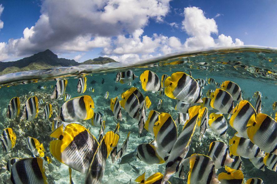 Los canales hacen las veces de toboganes submarinos entre el mar abierto y los atolones del ...
