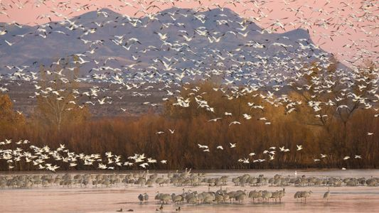 ¿Podría la presidencia de Biden beneficiar a las especies en peligro de extinción y a otros ...